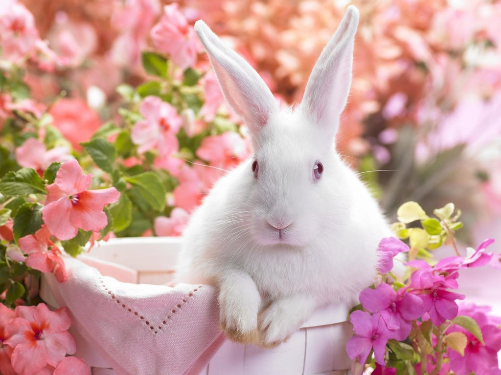 Beatrix-Bunny-1024x768